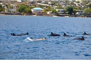 nage_avec_les_dauphins__swim_with_dolphins